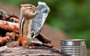 Chipmunk reads ingredients...PIC BY MICHAEL HIGGINS / CATERS NEWS - (PICTURED: CHIPMUNK READING BREAKFAST BAR INGREDIENTS) - This hungry chipmunk must be a real health NUT - as he appears to be reading through the list of ingredients on a breakfast bar wrapper before tucking in. Obviously worried about his waistline the cheeky critter picked up the wrapper almost as though he was reading a newspaper before scanning through the contents. And after a thorough check he decided to pass on the tasty granola bar treat - but still peckish returned to a can full of other food to look for something more suitable. The hilarious moment was captured by keen photographer Michael Higgins, 29, while on a camping trip at Algonquin Provincial Park in Ontario, Canada. SEE CATERS COPY